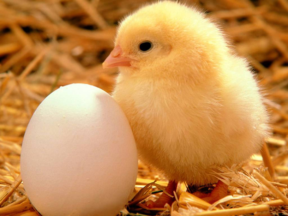 what came first - the chicken or the egg?